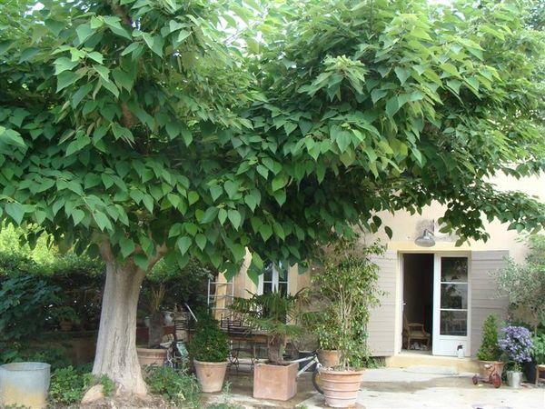 Acheter une maison ancienne r nover maubec maison et for Acheter une maison dans le vaucluse